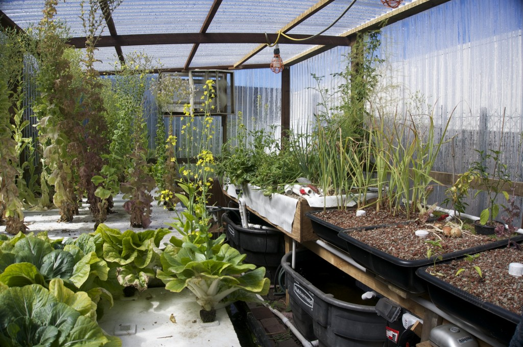 inside of greenhouse