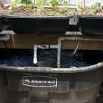 Aquaponics: Plants and Fish Tank
