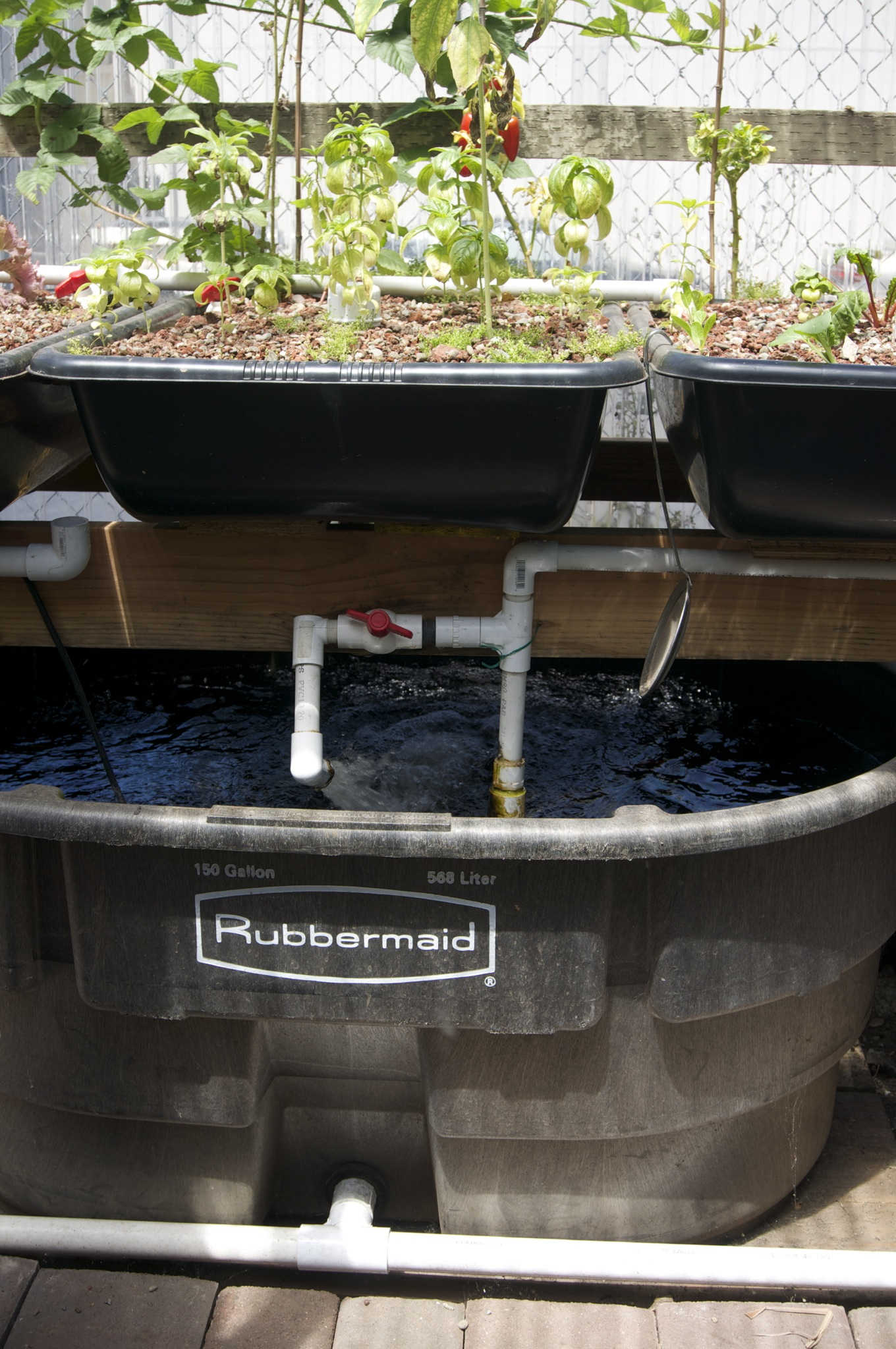 Research tribe awesome for Fish garden system